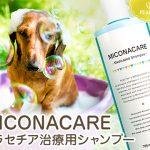 ペルシーミコナケアシャンプー(犬猫兼用)の口コミからマラセチア皮膚炎への効果と副作用、通販最安値を検証